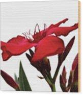 Oleander Blood-red Velvet 3 Wood Print