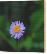 One Little Wildflower Wood Print