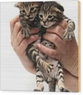 One Week Old Kittens Wood Print