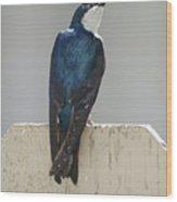 Ooooh My Swallow Wood Print
