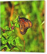 Orange Butterfly Too Wood Print