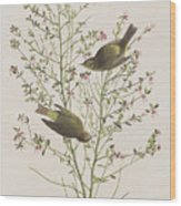 Orange Crowned Warbler Wood Print