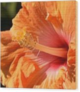 orange Hibiscus blossom Wood Print