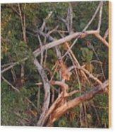 Orange Iguana Wood Print