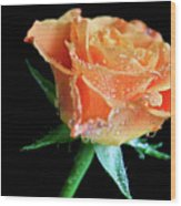 Orange Peach Rose Wood Print by Tracy Hall