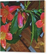 Orange Trumpet Vine At Pilgrim Place In Claremont-california   Wood Print