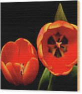 Orange Tulip Macro Wood Print