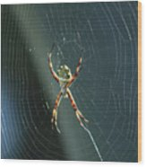 Orb Weaver Spider And Web Wood Print