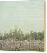 Orchard Of Apple Blossoming Tees Wood Print by Sandra Cunningham