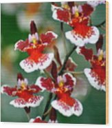 Orchid 34 Wood Print