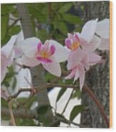 Orchid Bunch Wood Print
