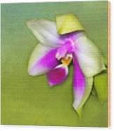 Shy Orchid  Wood Print