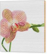 Orchid, Phalaenopsis, Flower Wood Print