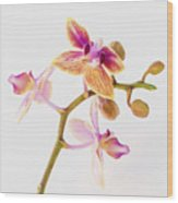 Orchid Study Wood Print