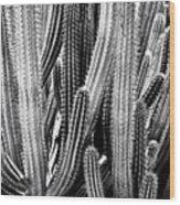 Organ Pipe Cactus Wood Print