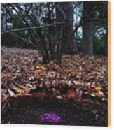 Organize Purple Berries Wood Print