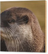 Oriental-small-clawed-otter Wood Print