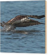 Osprey Fishing Wood Print