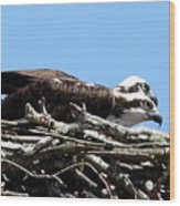 Osprey Pair Wood Print