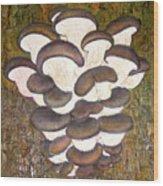 Oyster Mushroom Wood Print