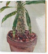 Pachypodium Wood Print