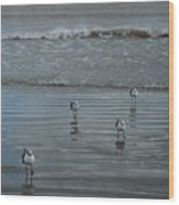 Padre Island Shore Birds Wood Print