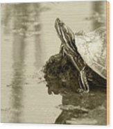 Painted Turtle On Mud In A Marsh Wood Print