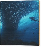 Palau, Diving Wood Print by Dave Fleetham - Printscapes