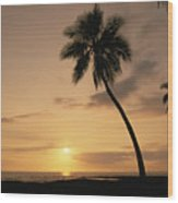 Palm At Sunset Wood Print