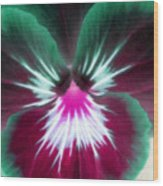 Pansy Power 71 Wood Print
