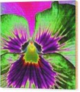 Pansy Power 82 Wood Print