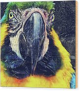 Parrot Art  Wood Print