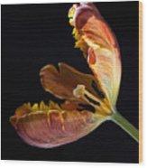 Parrot Tulip 26 Wood Print