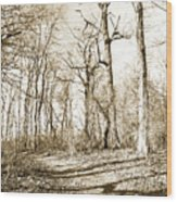 Path In A Forest Wood Print