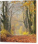 Path Of Red Leaves Towards Light In Fall Forest Wood Print