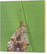 Pearl Crescent Wood Print