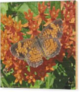 Pearly Crescentspot Butterfly Wood Print