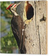 Pileated #26 Wood Print