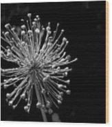 Pincushion Wood Print