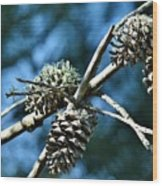Pine Cones On Dry Branch Wood Print