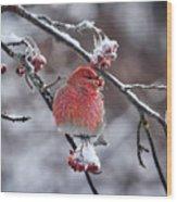 Pine Grosbeak Wood Print