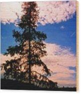 Pine Tree By Peck Lake 4 Wood Print