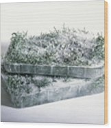 Pine Twigs And Ice Wood Print