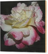 Pink And White Rose Wood Print