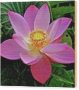 Pink Blooming Lotus Wood Print