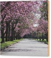 Pink Blooming Trees Wood Print
