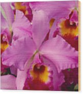 Pink Cattleya Orchids Wood Print by Allan Seiden - Printscapes