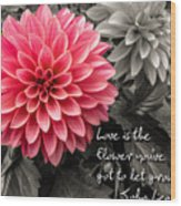 Pink Dahlia With John Lennon Quote Wood Print