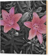 Pink Daylilies With Partially Desaturated Petals And Black And White Background Wood Print
