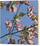 Pink Dogwood Wood Print